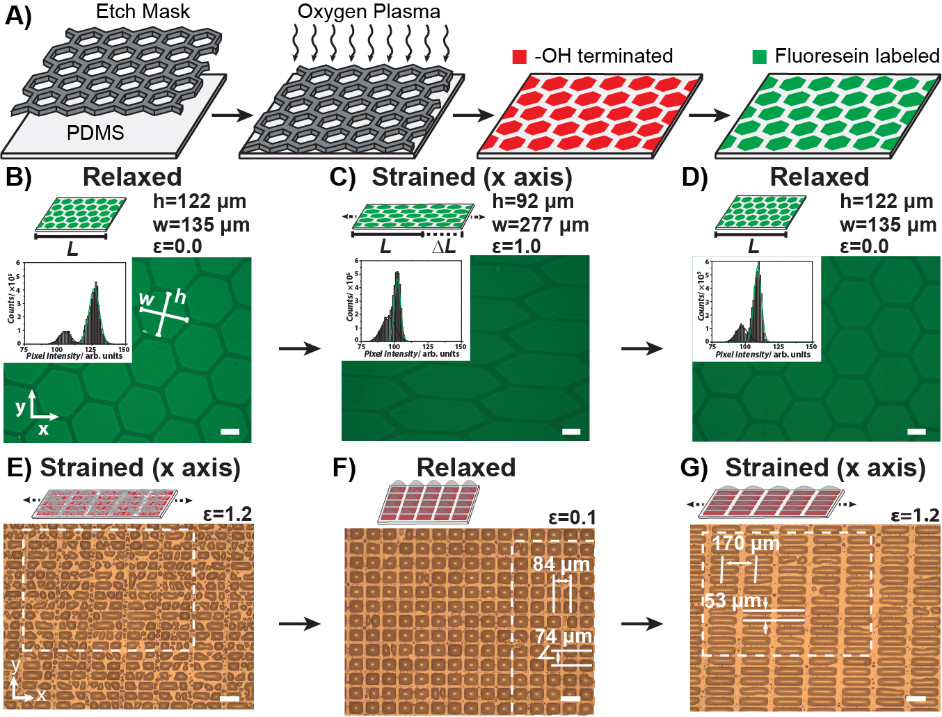 Journal Club for February 2019: Stretchable Chemical
