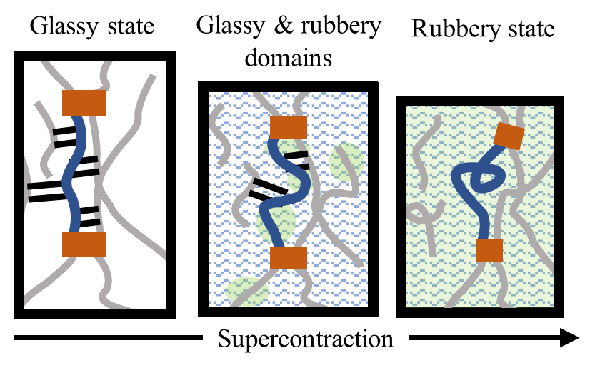 supercontraction